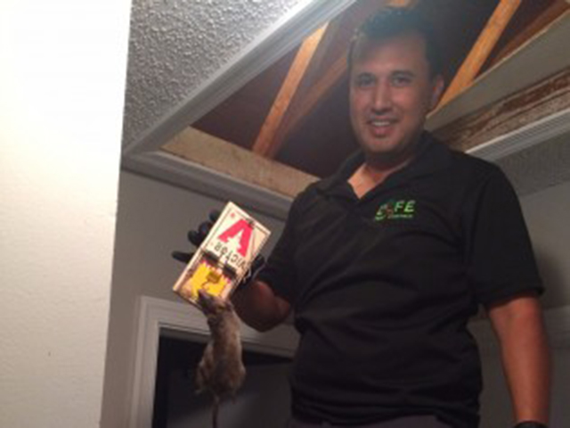 life pest control worker with a trapped rat