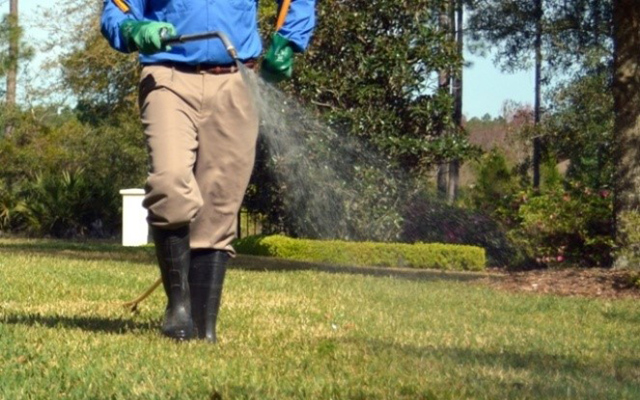 man spraying insecticide on lawn