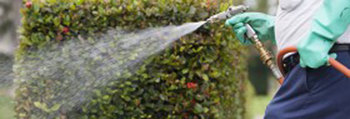 man spraying lawn ornamental to remove insects